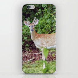 Young Buck in Velvet iPhone Skin