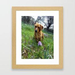 Salepi Framed Art Print
