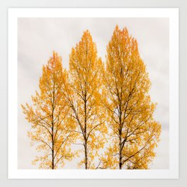 Aspen Trees #decor #society6 #buyart Art Print