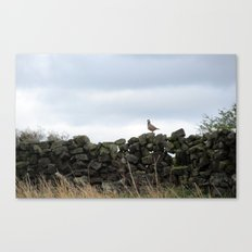 Partridge on a Wall Canvas Print