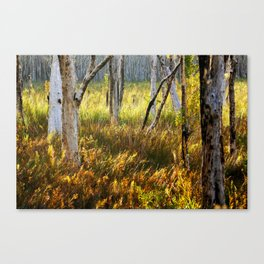 Paperbark Swamp Canvas Print