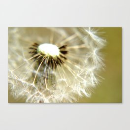 Some Have Gone Canvas Print