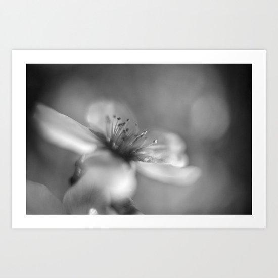 White flowers. Mono Art Print