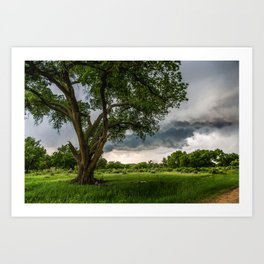 Big Tree - Tall Cottonwood and Passing Storm in Texas Art Print
