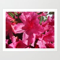 Beauty Blooming Art Print
