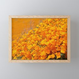 Golden Meadow of California Poppies in Bloom by Reay of Light Photography Framed Mini Art Print