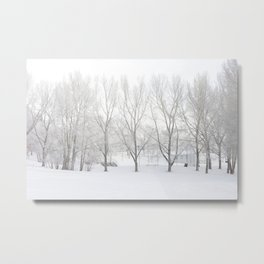 Winter in Confederation Park Metal Print