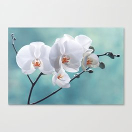 Orchid white macro 084 Canvas Print