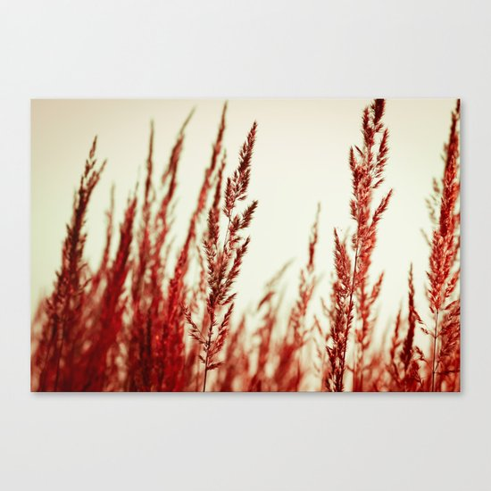 whispering grasses II Canvas Print