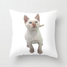 Flame Point Siamese Kitten Throw Pillow