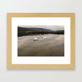 Coniston Water Swans Framed Art Print
