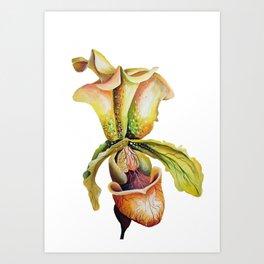 Paphiopedilum, Slipper Orchid Art, Venus Lady Slipper, Exotic Tropical Orchid Art Print