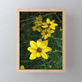 Coreopsis Framed Mini Art Print