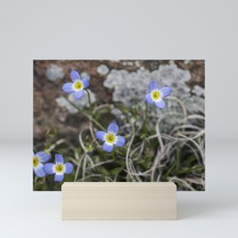 Wildflower Bluets Mini Art Print