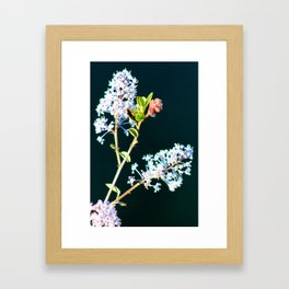Lavender Color Wild Flowers Framed Art Print