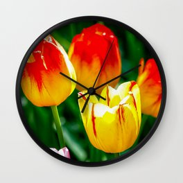Colorful Tulips In Spring Wall Clock