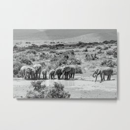 A group of Elephants | Addo Elephant National Park South Africa. Minimalistic print - fine art photography Art Print  Metal Print