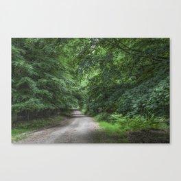 Shady Beech Path 1 Canvas Print