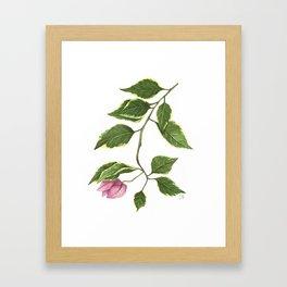 Pink Bougainvillea Framed Art Print