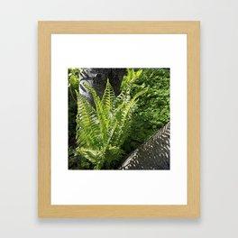 Ferns - leaves and shadows - against birch bark Framed Art Print