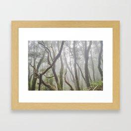 Dream Woods. Garajonay National Park. Framed Art Print