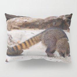 Funny wild racoon feeding in Costa Rica Pillow Sham