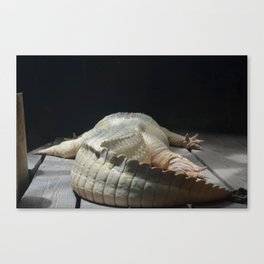 Lazy Alligator Canvas Print