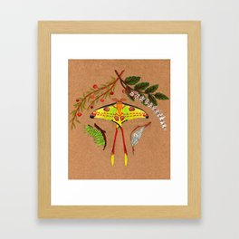 Comet Moth (Argema Mittrei) Framed Art Print