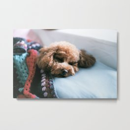 Sleeping Puppy Metal Print