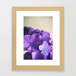 Vintage Hydrangena Framed Art Print