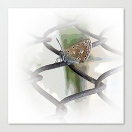 butterfly on fence Canvas Print