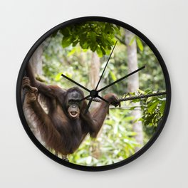 Orang Utan at Sepilok Orang Utan Rehabilitation Centre, Borneo Wall Clock