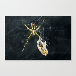 Yellow Garden Spider With Prey Canvas Print