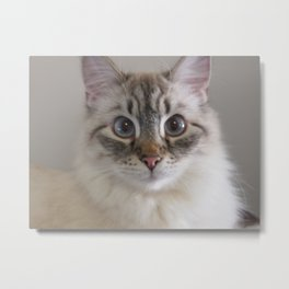 I Am A Cat Metal Print