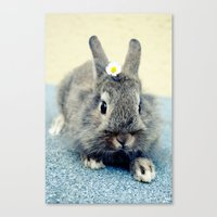 bunny Canvas Prints featuring Bunny by Falko Follert Art-FF77