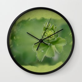 Lady`s mantle is revealing Wall Clock