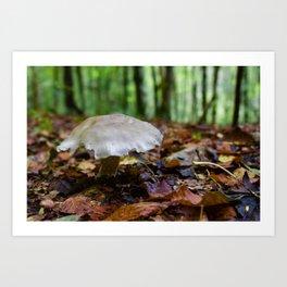 Mushroom In Forest Art Print