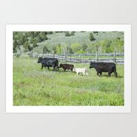 cows Art Prints featuring cows by Julie Luke