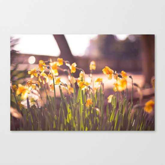 Sunday morning Canvas Print