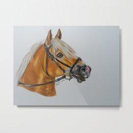 Haflinger Horse Metal Print