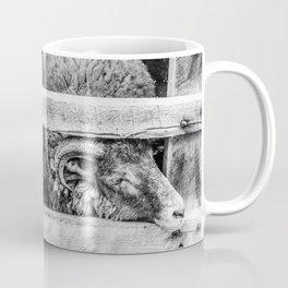 Two Little Sheep Coffee Mug