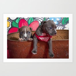 Cute Brother and Sister Pitbull Puppies with Blue Eyes Cuddling Together in a Spring Basket Art Print