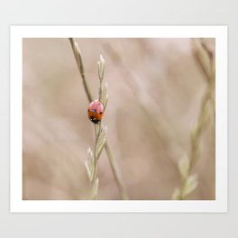 Ladybug in the grass Art Print
