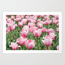 Arlington Tulips Art Print