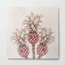 Pink pineapple.Pink exotic flowers Metal Print