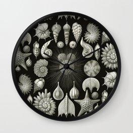 Ernst Haeckel - Thalamphora (Seashells) Wall Clock