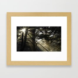 Forest Sunshine Framed Art Print