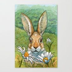 Funny bunnies - with Chamomiles 889 Canvas Print