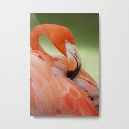 Miami Flamingo Metal Print