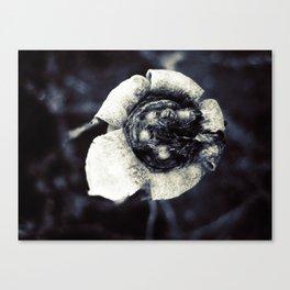 beautiful dead flower Canvas Print